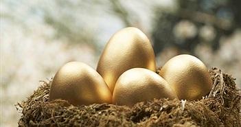 Chim khổng tước đẻ trứng vàng siêu quý hiếm... sự thật ngã ngửa