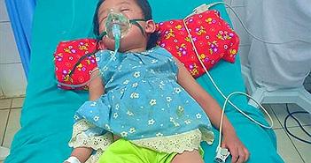 Sau 5 phút bị kiến đốt, bé 3 tuổi ở Tuyên Quang sốc phản vệ