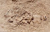Phát hiện khu mộ quái vật đầu bò mình ngựa ở Anh