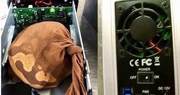 Bắt giữ một người đàn ông buôn lậu trăn bằng hộp ổ cứng