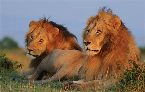 Ly kỳ tour về quan hệ đồng tính của động vật