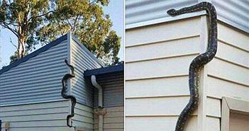 Muốn rắn không bò vào nhà chớ bỏ qua 3 mẹo nhỏ này