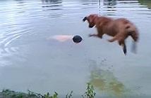 Nhảy xuống hồ thử lòng chó cưng, chủ nhân rơi nước mắt chứng kiến...