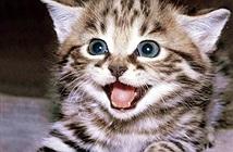Video: Vì sao loài mèo xâm chiếm mọi nơi trên thế giới?