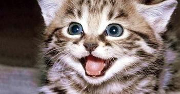 Video: Vì sao loài mèo 'xâm chiếm' mọi nơi trên thế giới?