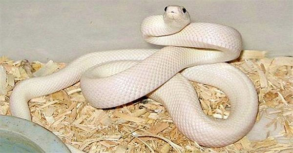 10 loài rắn đẹp nhất hành tinh