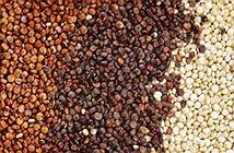 Hạt Quinoa là gì? Lợi ích vàng của hạt quinoa đối với sức khỏe
