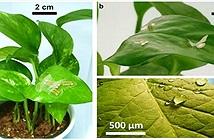 Bộ cảm biến theo dõi nhiệt độ và độ ẩm xung quanh cây trồng