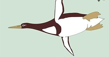Phát hiện dấu vết chim cánh cụt to bằng người