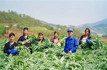 Thực hiện các mục tiêu phát triển bền vững: Những hỗ trợ về chính sách