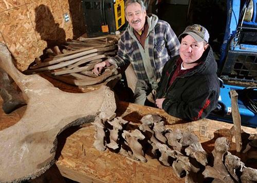 Đào xương voi răng mấu hơn 10.000 năm trong sân nhà