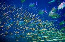 Giác quan thứ sáu của loài cá