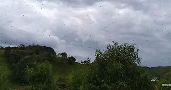 Choáng với cơn mưa nhền nhện ở Brazil