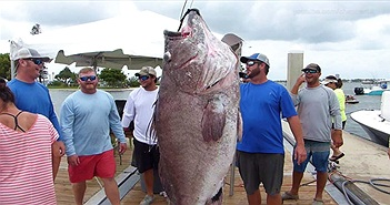 Ngư dân bắt được cá mú 50 tuổi khổng lồ ở Mỹ