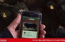 Nông dân Anh đồng loạt sử dụng Tinder để tìm bạn tình cho gia súc
