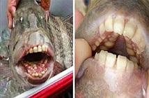 Cá kinh dị có răng như người nằm chình ình trên bờ biển