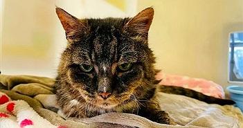 Mèo cưng quay về tìm chủ cũ sau 20 năm và cái kết