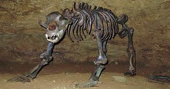 Mang thân hình to lớn nhưng loài gấu khổng lồ này lại ăn chay