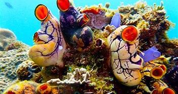 Phát hiện hàng trăm sinh vật kỳ lạ dưới đáy biển Philippines