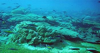 Việt Nam đối mặt bão, lũ chưa từng có nếu mất rạn san hô