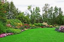 Trồng cây xanh ở nhà giúp giảm chứng thèm ăn vặt
