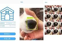 Trung Quốc phát triển AI nhận diện chó thất lạc dựa trên vân mũi của chúng