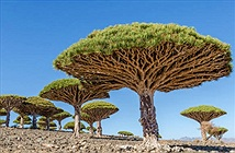 Những loài cây độc lạ mà bạn không thể tin chúng tồn tại trên Trái đất