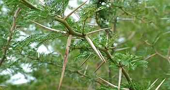 9 cơ chế tự bảo vệ của thực vật