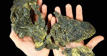 """Tìm thấy hộp sọ """"siêu nhỏ"""" của loài khủng long ăn cỏ khổng lồ"""