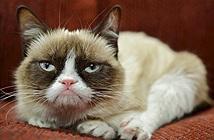 Mèo mặt ngu kiếm cho chủ 2000 tỷ đồng nhờ Internet