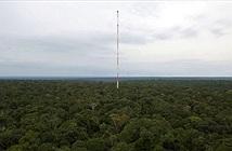 Tháp quan sát chọc trời giữa rừng Amazon