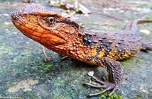 Những loài mới phát hiện nổi bật ở Việt Nam