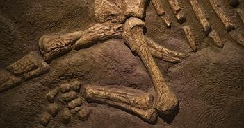 Sửa nhà tá hoả phát hiện bộ xương nghi của khủng long