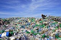 Phát hiện vi khuẩn ăn rác thải nhựa