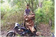 Lâm tặc chụp ảnh tự sướng và rao bán gỗ lậu trên Facebook