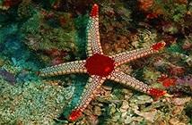 Quái vật kinh khủng nhất đại dương: Sở hữu nghìn mắt nhưng không có não