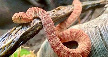 Nhân viên ở sở thú bị rắn độc cắn