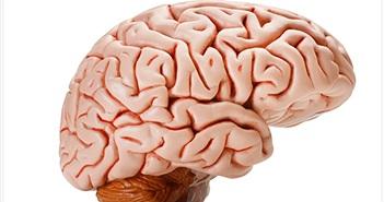 Những bí mật thú vị về bộ não