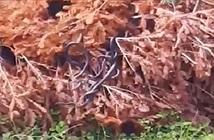 Rùng mình cả đàn rắn lổm ngổm bò ra từ cây khô