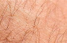 Phát triển thành công da từ tế bào gốc có thể được cấy ghép và mọc lông