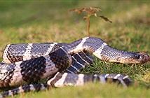 Cô gái âu yếm rắn độc và kết không thể kinh dị hơn...