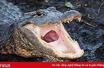Cảnh báo của cảnh sát Mỹ về cá sấu ngáo đá gây bão mạng