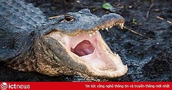 """Cảnh báo của cảnh sát Mỹ về """"cá sấu ngáo đá"""" gây bão mạng"""