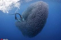 Kinh dị khoảnh khắc thợ lặn bị đàn cá nhỏ nuốt chửng