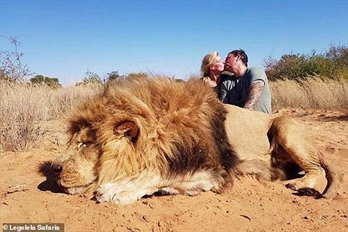 Rúng động cặp đôi hôn nhau bên con sư tử đã chết