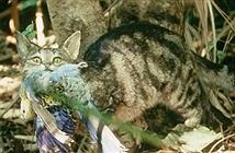Sự thực choáng về ác thú giết 2 tỷ động vật mỗi năm