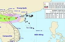 Đêm nay bão vào các tỉnh từ Thái Bình đến Thanh Hóa