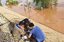 AAG lùi ngày sửa chữa vì bão số 10, FPT Telecom bị sự cố trên diện rộng
