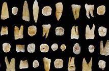 Hóa thạch cho thấy người hiện đại tới châu Á sớm hơn châu Âu