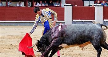 Hãi hùng bò tót húc thẳng vào chỗ hiểm người đấu bò
